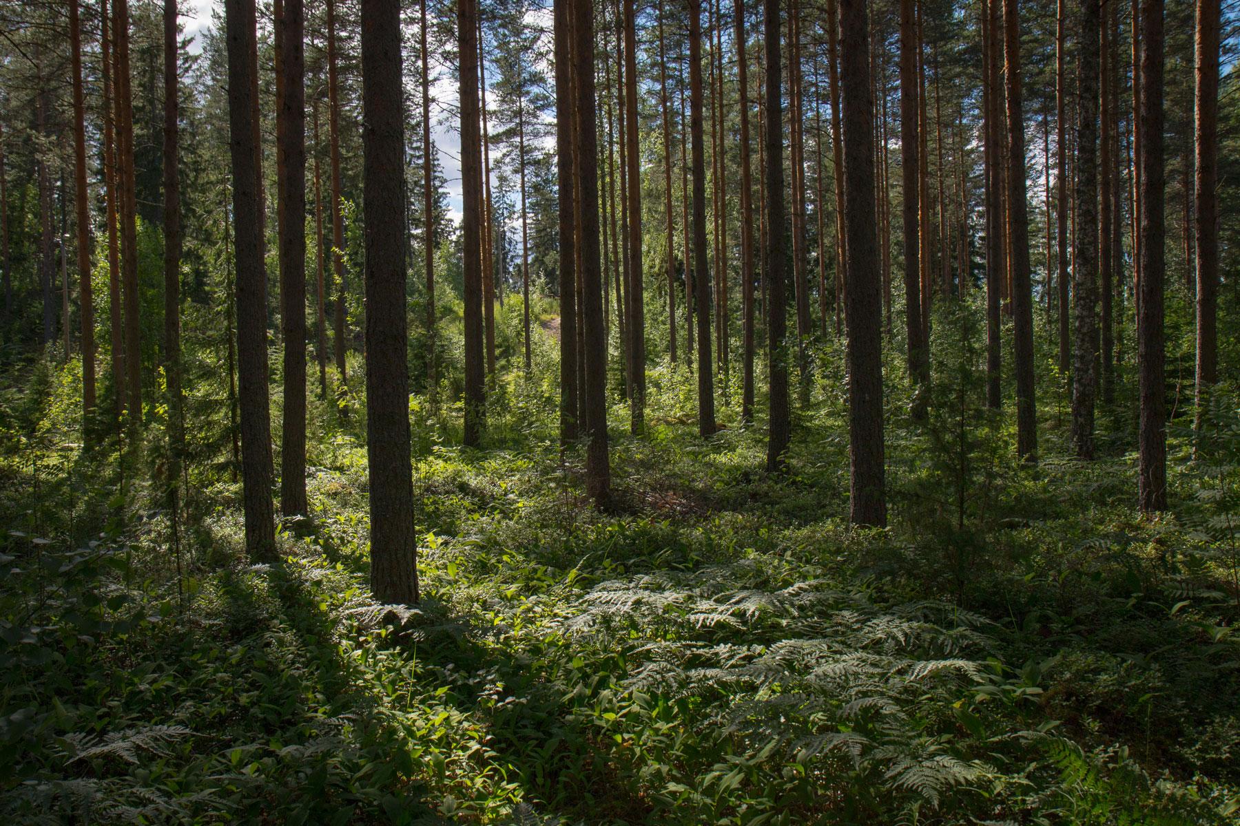green initiatives Frecan